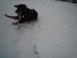 Yke in de sneeuw